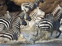 Serengeti, Ngorongoro, Tarangire And Manyara Camping Tour
