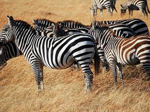 Masai Mara Trip Fotos