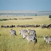 Ndovu Kenya Safari 5 días