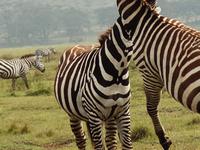 Budget Amboseli Safari
