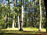 Zlota Gora Reserve