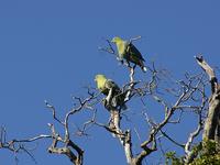 Zombitse-Vohibasia Parque Nacional
