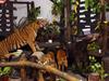 Zoo Melaka - Melaka