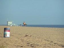 Zuma County Beach