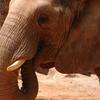 Z A In Elephant