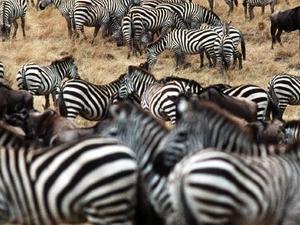Maasai Mara Special