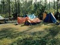 Everglades Long Pine Key