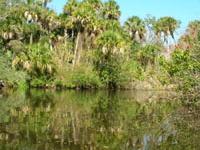 Whispering Palms Rv Resort