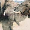 13 Days Kenya and Tanzania Safaris to Nairobi, Maasai Mara,  Lake Naivasha,  Lake Nakuru, Samburu Game Reserve, Aberdare Nationa