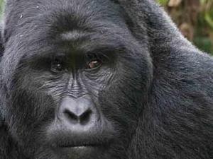 15 Uganda best safari Photos