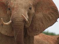 3 days Kenya Amboseli National Park