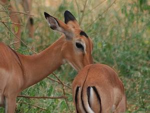 3 days Maasai Mara Safari Photos