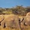 4 Days Amboseli Tsavo camping Safari