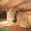 6 days Samburu / Lake Nakuru / Maasai Mara