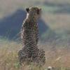 7 Days Cheetah Safari - Kenya