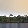 Amazon Dolphin Lodge - Pañacocha Forest