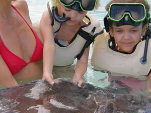 Antigua Island Safari & Stingray Photos
