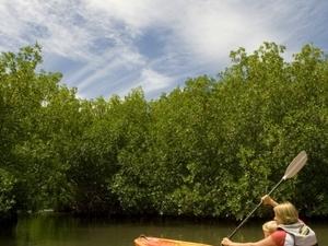 Antigua Island Safari Eco-Kayak Photos