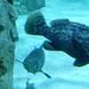 Aquarium and Shopping Mall Tour