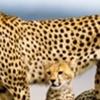 Camping safari ,Kenya,Samburu,Baringo,Bogoria,lake Nakuru