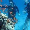 Daily Diving in Read Sea (Hurghada, Sasfaga)