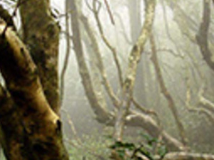 Fray Jorge National Park Tour & Del Encanto Valley Photos