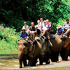 Full Day Mae Taman Rafting And Elephant Riding From Hotel Inside Chiang Mai City Only