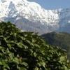 Ghorepani Poonhill Trek