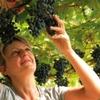 Grape Harvest Tour And Tasting