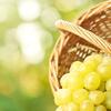 Half-day wine-tasting tour of Etyek from Budapest