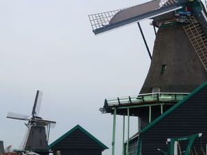 Holland Tulips and Windmills Day Trip from Amsterdam Photos