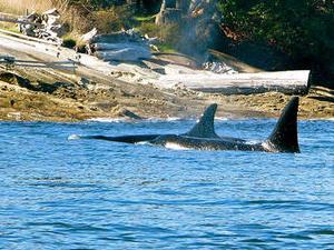 Howe Sound Sea Safari Cruise Photos