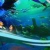 Istanbul Forum Magic Ice-Aquarium