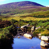 Kilkenny and Wicklow - 1 day tour from Dublin