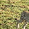 Maasai Mara Great Migration offer 2013