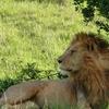 Maasaimara, lake Nakuru, Lodge,safari