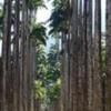 Maracana Stadium & Botanic Garden.