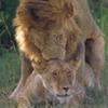 Masai Mara Camping Safaris 3 days budget camping safari