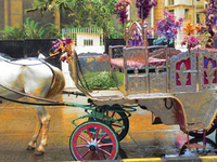 Mumbai Night Victoria Heritage Tonga Ride Tour in Colaba Area followed by dinner
