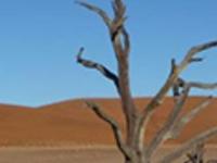 Namib desert tour (full day)