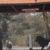 Parks, Giraffes & Karen Blixen