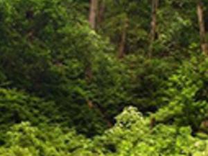 Rainforest hiking tour - world biosphere reserve Photos