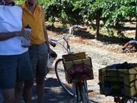 Sacramento Country Bike Tour and Wine Tasting