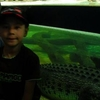 Skip the Line: SEA LIFE Sydney Aquarium Entrance Ticket