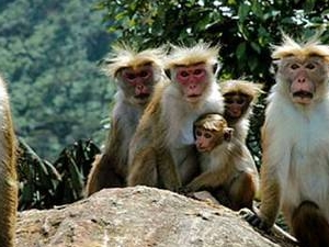 Sri Lanka south end tour in  4 days , 8 Passengers - All inclusive Photos