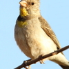 The Grand Tour to admire Abyssinia endemic birds