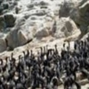 Tour Isla Damas - Humboldt Penguin National Reserve