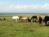 Treking Heavenly Kyrgyzstan