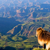 TREKKING AT THE HIGHEST PEAK OF ETHIOPIA WITH THE DRAMATIC LANDSCAPE OF SIMIEN MOUNTAIN