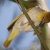 Two days birding in Ethiopia